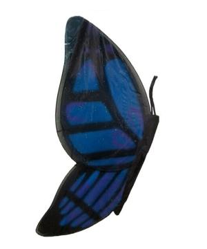 Wings Butterfly Black/blue Child Wings