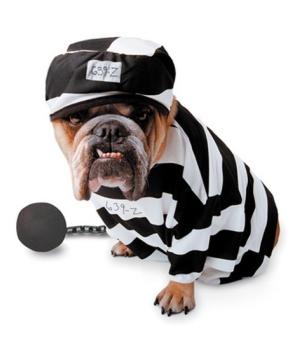 Zelda Prisoner Pet Costume