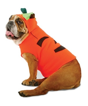 Zelda Pumpkin Pet Costume