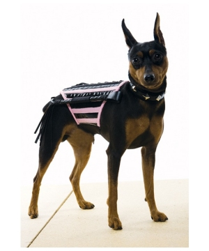 Doginatrix Pet Costume