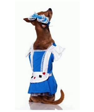 Alice Pet Costume