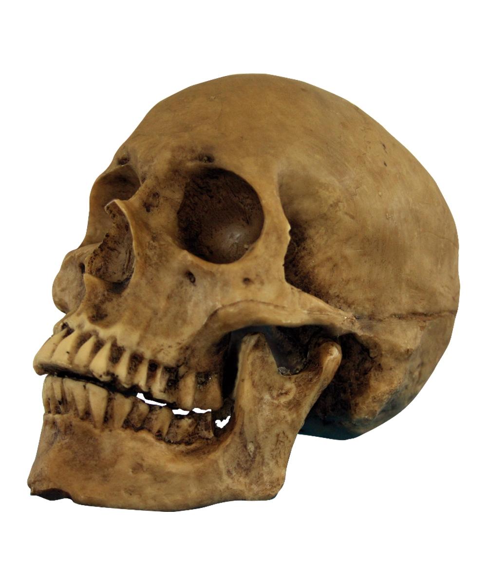 Halloween skulls decoration - Halloween Skulls Decoration 2
