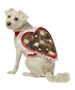 Heart Box of Chocolates Pet Costume