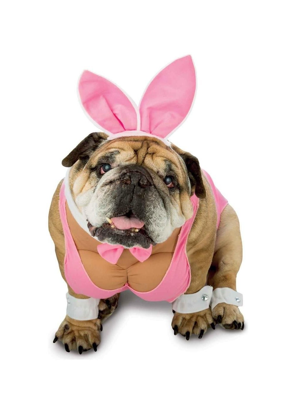 Hunny Bunny Dog Costume Pet Costumes New For 2017