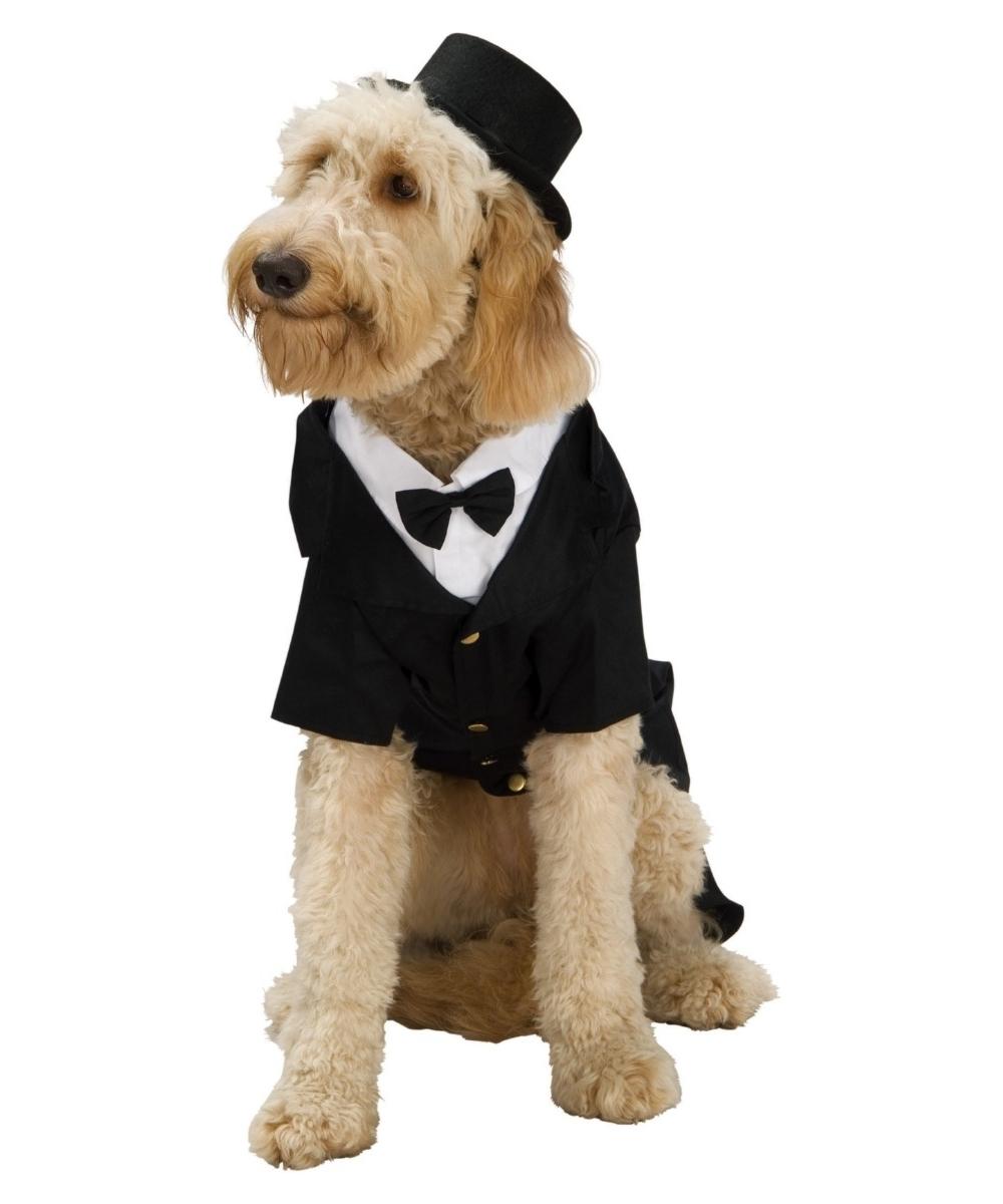 dapper dog costume - dog halloween costumes