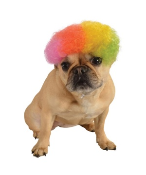 Rainbow Afro Pet Dog Wig
