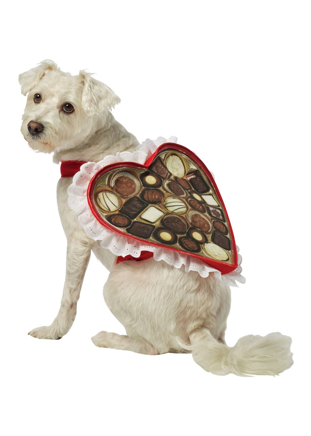 Heart Box Of Chocolates Pet Costume